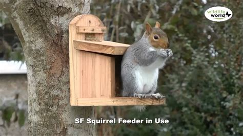 How To Detox From Methhetamine At Home by Squirrel Feeder Pictures Ftempo