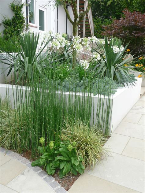 Modern Garden Plants Planting And Plants By Philip Nash Designplanting And Plants