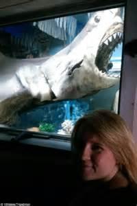 queensland shark hunter vic hislop sells frozen great