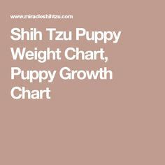 shih tzu growth chart the world s catalog of ideas