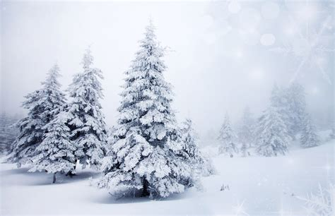 photo winter nature christmas tree snow seasons 7720x5000