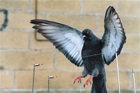 bird pigeon repellent deterrent decoys and spikes