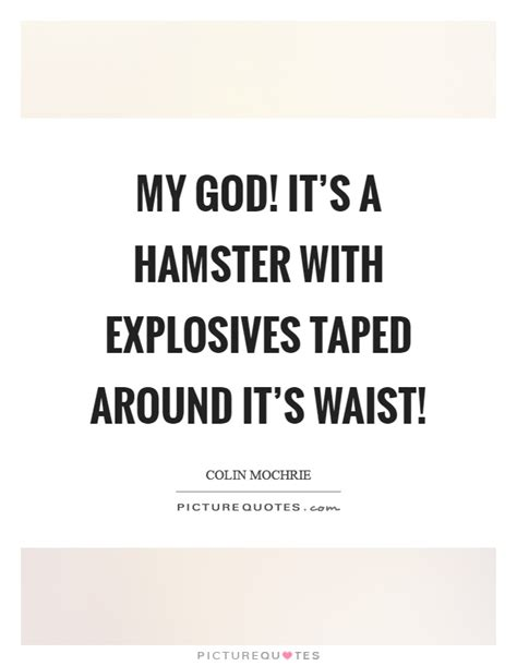 Its A Jungle Around Your Waist by My God It S A Hamster With Explosives Taped Around It S