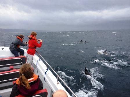 boat trip knysna dolphins and birds knysna boat trips so many interests