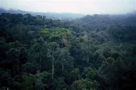 congolian rainforest simplebookletcom
