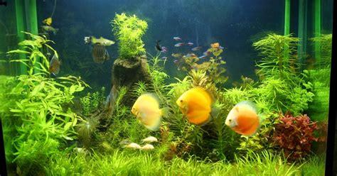Alat Pancing Ikan Air Tawar mata kail indo cara memelihara ikan hias di aquarium air