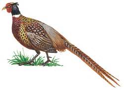 state bird of south dakota introduction to geography of south dakota geography of