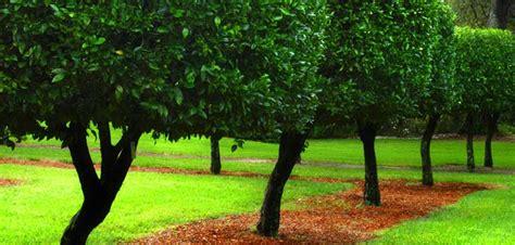 gartenbepflanzung ideen gartenbepflanzung planen ideen und tipps