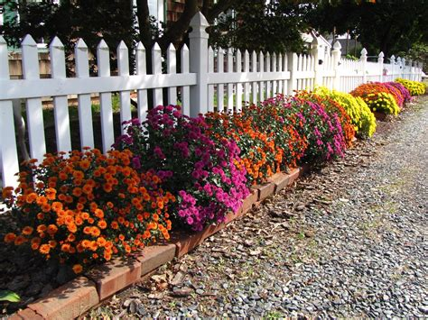 Garden Mums by Views From The Garden How To Root And Plant Cuttings