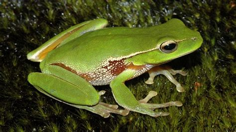 una rana a frog funny frogs hd wallpapers wallpapers pictures images