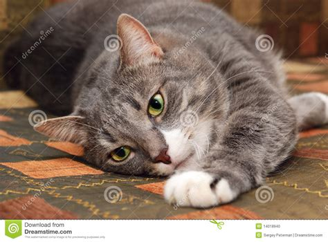 cat on couch cat on sofa stock photo image 14018940