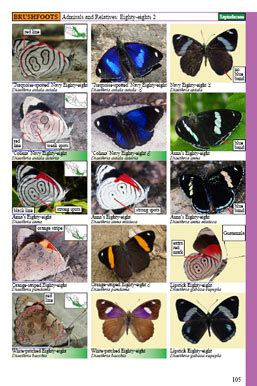 a guide to butterflies of mexico and central america books guide to mexican butterflies