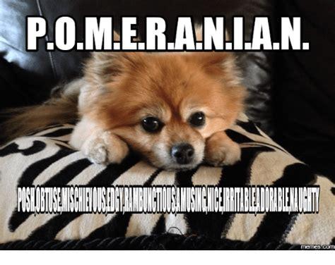 pomeranian meme 25 best memes about posh meme posh memes