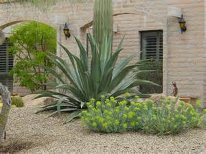 20 modern desert landscaping plants photos landscape ideas