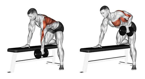 dumbbell rows without bench top 10 back exercises for building width and thickness