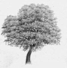 cara menggambar pohon dengan hasil mirip aslinya flora