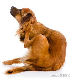 what are the uses of aloe vera for dogs with pictures