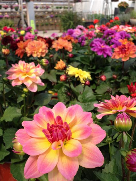 keeping your annual flowers blooming all summer malmborg