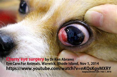 pomeranian breathing fast veterinary medicine surgery singapore toa payoh vets dogs cats rabbits guinea