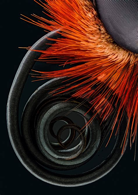 the best microscope photos of the year from nikon small