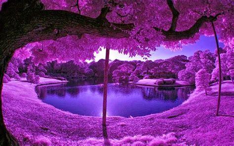 purple tree hd wallpapers desktop purple tree hd wallpapers