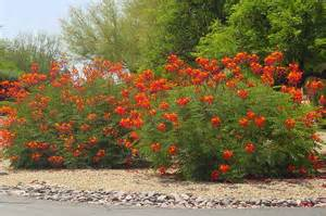 Arizona Commercial Lighting Gainesville Landscape Plant Of The Month Bird Of Paradise