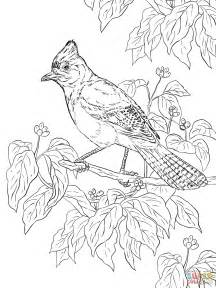 realistic coloring pages realistic steller s coloring page free printable