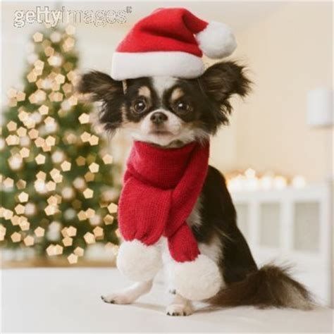 merry puppy merry all small dogs photo 17732032 fanpop