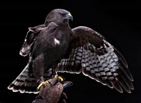 beautiful studio portraits of injured birds at a bird