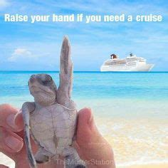 funny cruising quotes google search cruise pinte