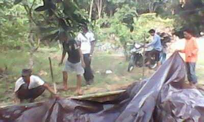 Bibit Jamur Tiram Banjarmasin pembuatan kolam terpal kelompok budidaya ikan maju bersama