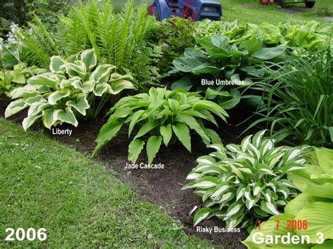 hosta garden ideas way to lay out hostas garden ideas gardens of earthly