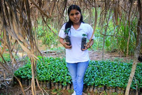 Jual Bibit Kefir Organik pertanian mongabay co id page 5