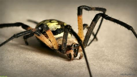 Animals Spider Wallpaper Image ? Background Wallpaper HD