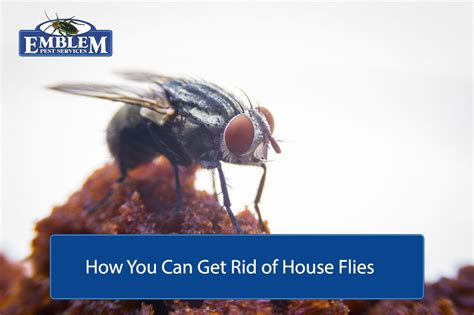 How To Get Rid Of Flies In The House by Flies Archives Emblem Pest Services