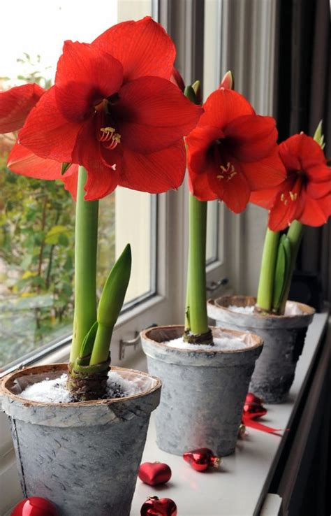 invite nature in with 31 incredible indoor plant ideas