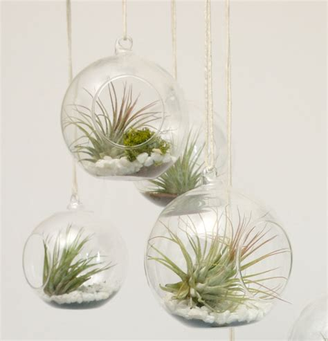 Best Stores To Buy Home Decor by Easily Inspired Diy Vase And Air Plants