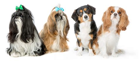Full Service Dog Grooming Green Dog Wash | critter clippers full service pet grooming for dogs and cats