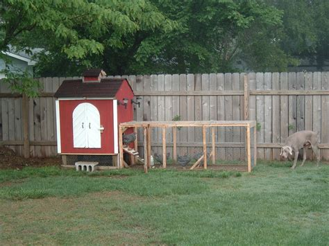 backyard chicken run backyard chicken coop