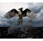 Bird Pictures Phoenix