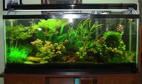 Aquascaping Cichlid Aquarium by 1000 Images About Aquascaping On Cichlids