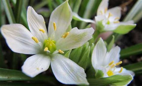 fiori di bach of bethlehem rimedio floreale per superare gli stati di shock emotivi