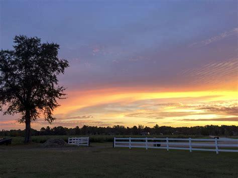 imagem gratuita paisagem por  sol arvore amanhecer