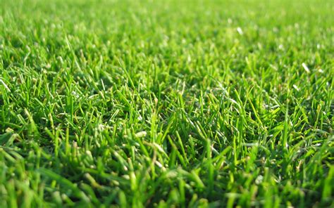 wallpaper abstract grass wallpapers grass wallpapers