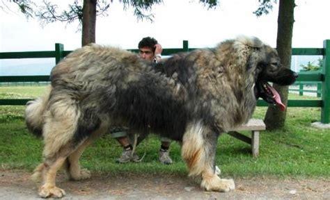 Russian man kills bear in north