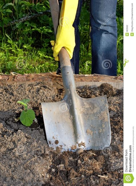 Digging by shovel stock photo. Image of spring, digging