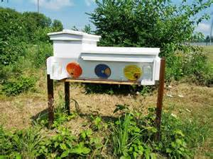 Top Bar Hive For Sale by Bee Ing The Hybrid Hive