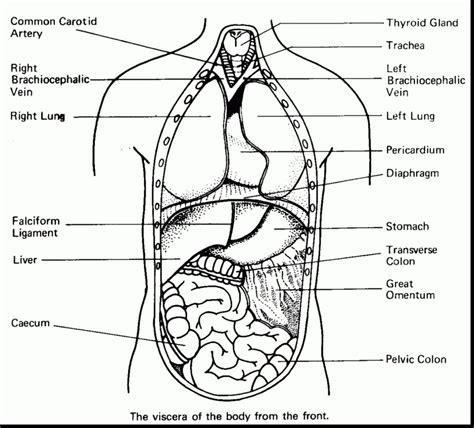 Anatomy Coloring Pages Free Snap Cara Org Anatomy Coloring Book Pages