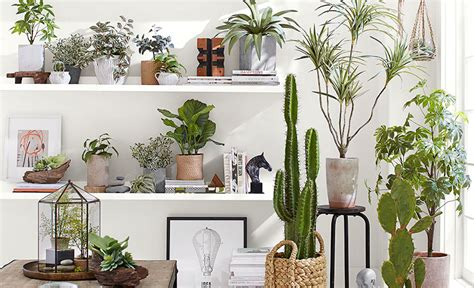 hanging plant ideas 5 indoor hanging planter ideas pottery barn