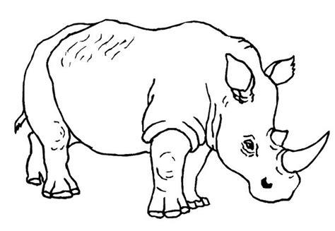 gambar sketsa binatang  diwarnai koleksi gambar